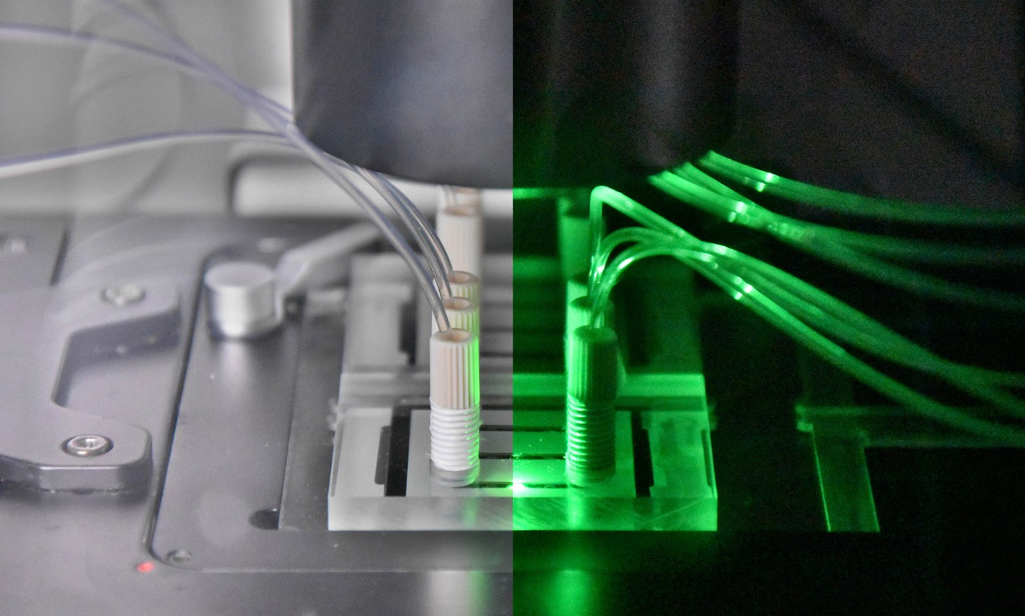 Microfluidic bioreactors for in-vitro toxicity measurements (Liver-on-a-Chip)